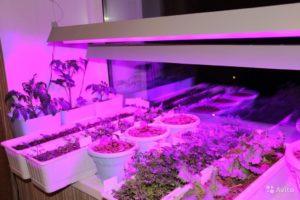 Лампы дневного света для подсветки растений