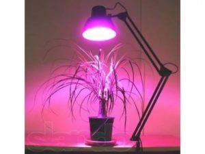 Подсвечивание растений с помощью лампы