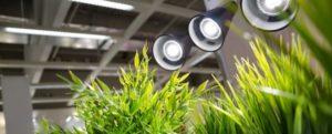 Использование газоразрядных ламп для подсветки растений